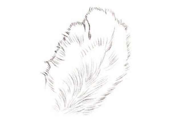 2,猫咪的爪子是掌心朝上的, 在绘制背面的绒毛的时候 3,猫咪身上的