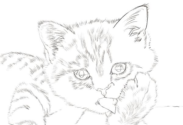 分步骤小猫咪简笔画