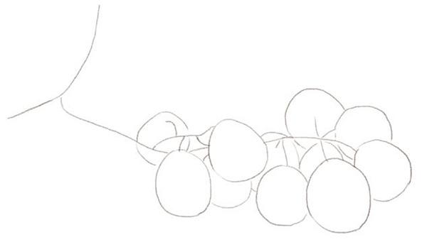 手绘彩铅植物葡萄