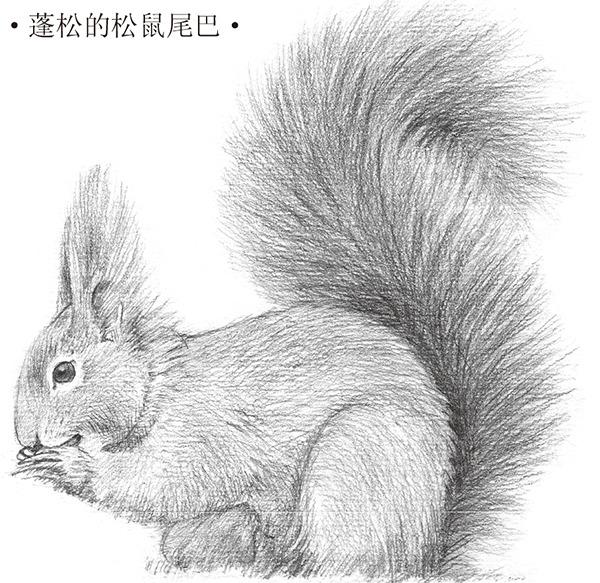 素描可爱的松鼠